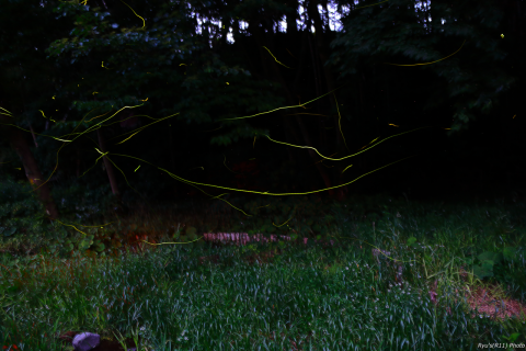 【ダイジェスト】光の軌跡を求めて〜ホタルの撮影〜